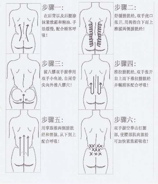 肾脏结构图手绘